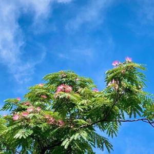 ねむの木開花