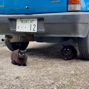 #黒猫は幸せを呼ぶ