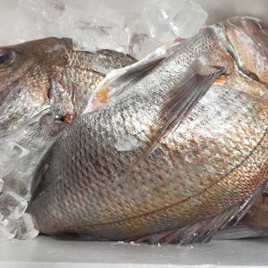 魚の頂き物