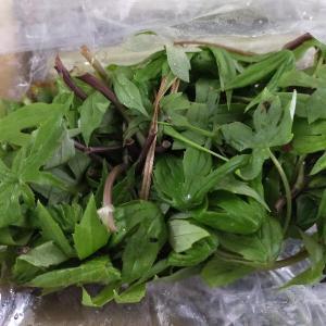 山菜とサラミ類の頂きもの