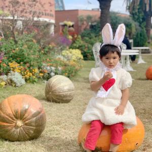 かぼちゃがいっぱい♡ハロウィンを堪能できるスポット