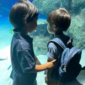 水族館と公園とアマゾンプライムデー