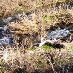 水ぬるみ、川面たゆとう
