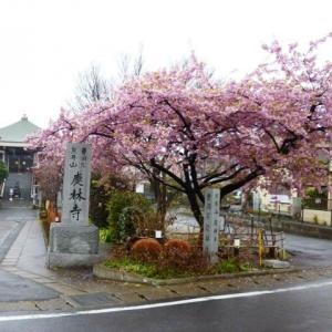 2020年三月の薬師詣で・墨田区