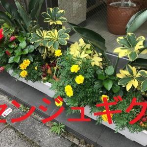 マリーゴールドも開花時期は長いですよねー!!+とても個性的なリビングアート手織倶楽部第11回課題