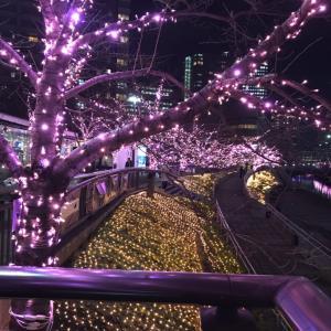 数十色の糸でラーヌ織りバッグのバリエーション+毎年定番のイルミネーションと言えば目黒川の冬の桜