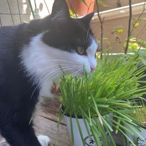 小さなベランダの猫と緑