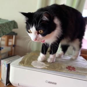 急ぎの猫日記