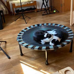 トランポリン猫とベランダ猫