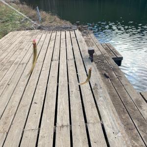 立岩湖でワカサギ釣り