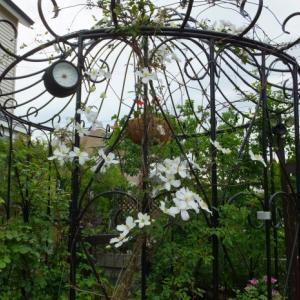 春のバラの様子 Ⅰ