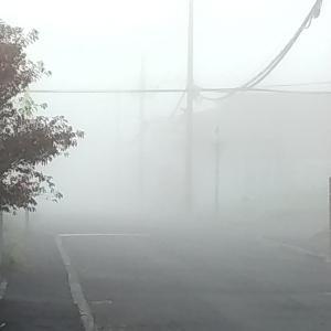 霧の中からコンニチハ