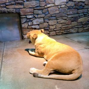 【休日】今日は、石川動物園!!・・・・☆