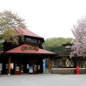 山桜を背景としたポートレート   藤川奈緒 埼玉県ときがわ村   2012年4月 ときがわ村撮影