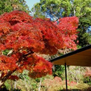 近くの紅葉~香取神宮