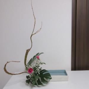 石化柳と庭のバラ