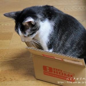 猫ブログですよーw