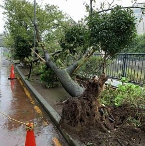 台風の被害。