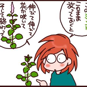 ハーブの収穫のマメ知識【今日のハーブ活】