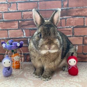 theウサギなチェスナット