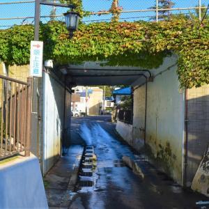 青森県青森市 浅虫散歩。あさむし温泉プリン金次郎のプリンとワンコに癒される。