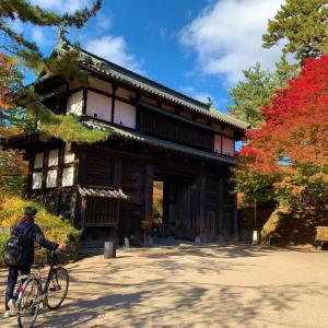 青森県弘前市  弘前城菊と紅葉祭りと彦庵の清水森ナンバおろしそば。