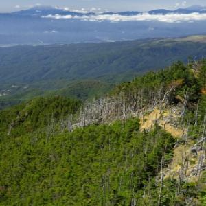 北八ヶ岳で苔の森に浸る