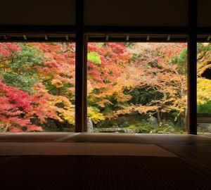 京都の静かな紅葉を求めて~蓮華寺~