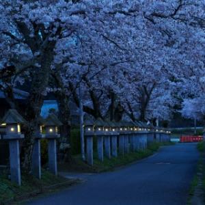 石灯籠の灯に魅かれて 大鳥神社