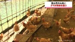 富山市の山あい クマが鶏舎を襲う(KNB 令和2年10月29日 19時23分)