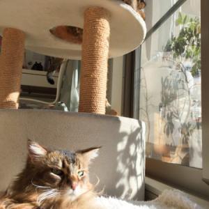 寒い晴れた日の休日は、猫たちとひなたぼっこしていたい。