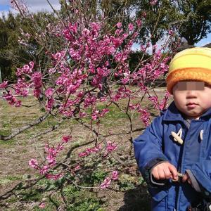梅が綺麗に咲いてました