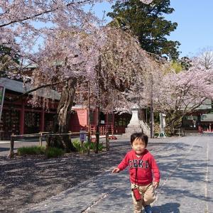 鹽竈神社(塩釜神社)へ