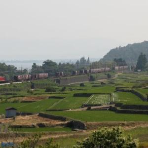 棚田(2010年)