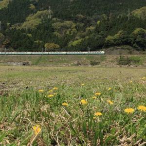 春の湖北(2009年)