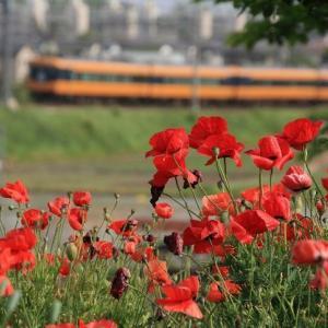 紅い花(2011年)