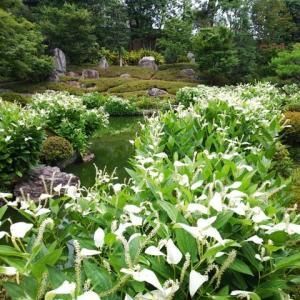 4ヶ月振りの京都