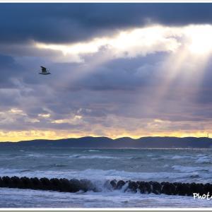 Photogenic Seagulls 287
