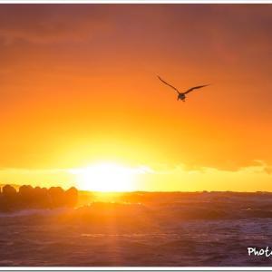 Photogenic Seagulls 288
