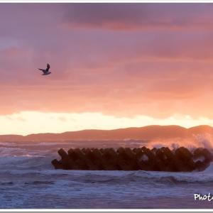 Photogenic Seagulls 289