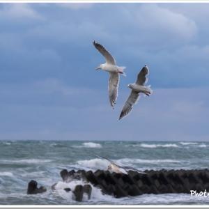 Photogenic Seagulls 295
