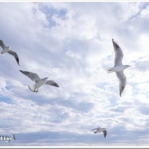 Photogenic Seagulls 296