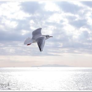 Photogenic Seagulls 297