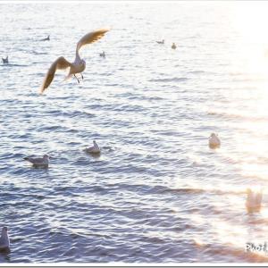 Photogenic Seagulls 324