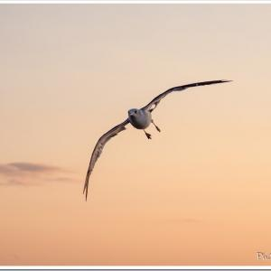 Photogenic Seagulls 348
