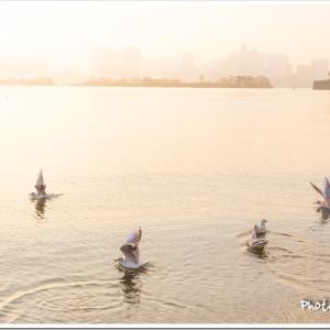 Photogenic Seagulls 357