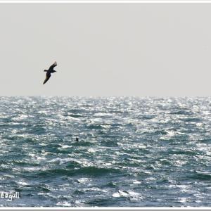 Photogenic Seagulls 279