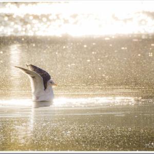 Photogenic Seagulls 280