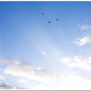 Photogenic Seagulls 281