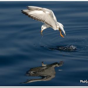 Photogenic Seagulls 282
